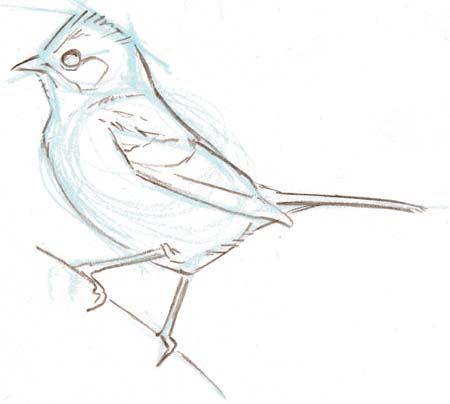 Bird Sketch 12 - John Muir Laws
