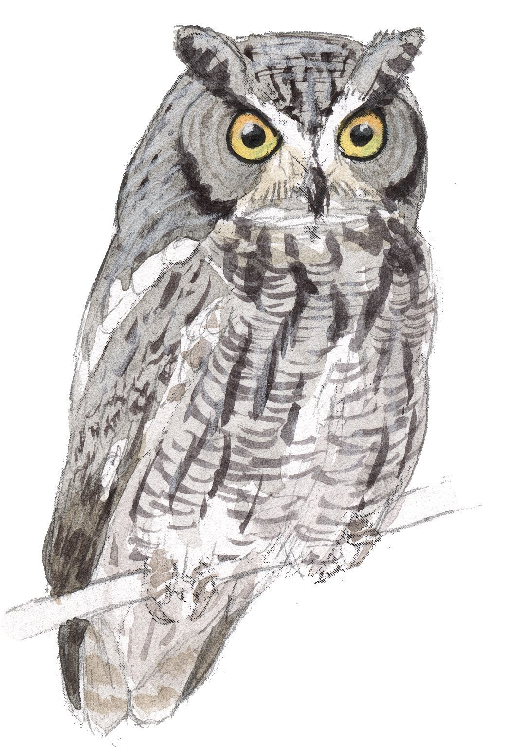 How To Draw Screech Owl