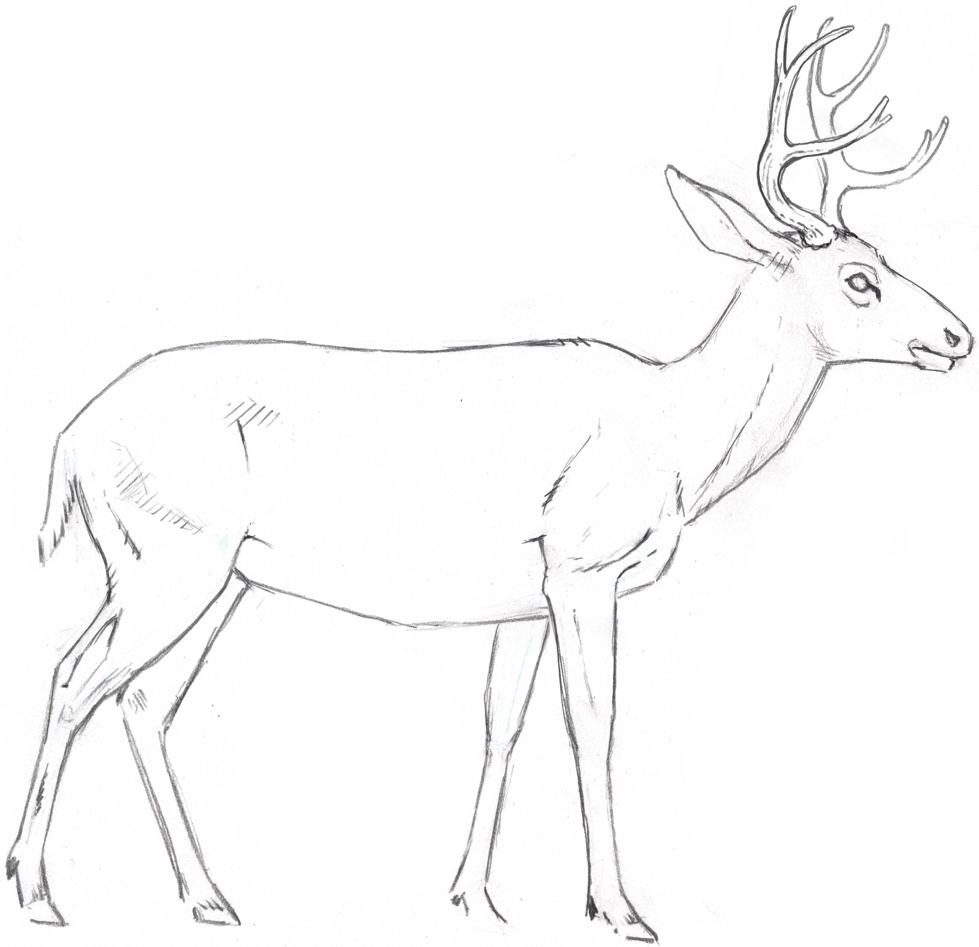Deer Drawing Draw a Deer Fur Texture