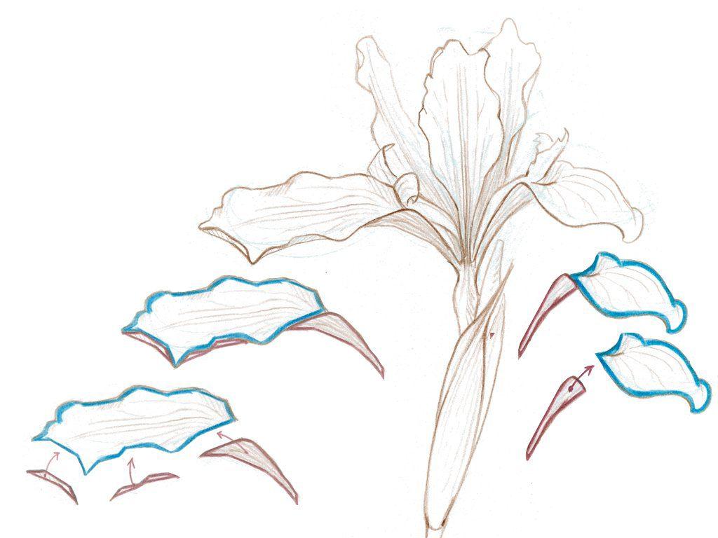 Drawing Plants 2.034-003
