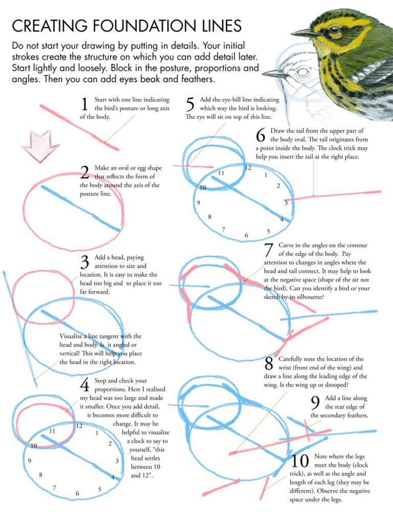 Drawing Birds Tutorial John Muir Laws