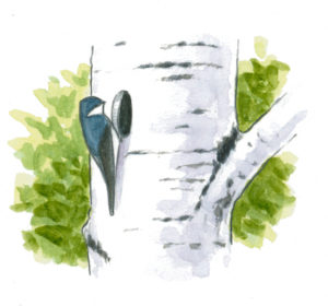 swallow tree nest