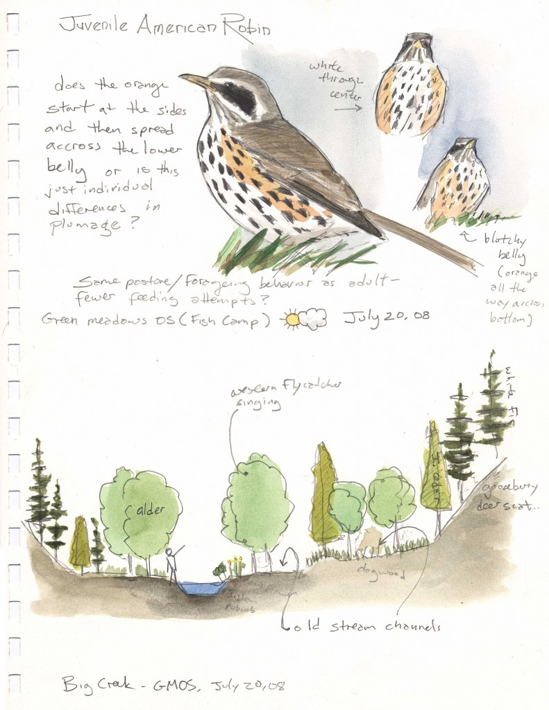 A cross-section view can be created along with a map or independently. Note how I have indicated my discoveries such as a bird in the tree or old stream channels. It also helps to show the scale. Draw yourself into the pictures to give a sense of scale.