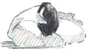 canada goose sleeping